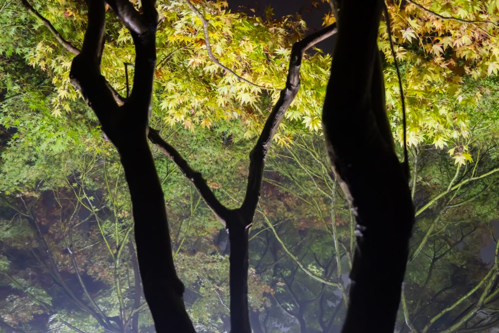 三景園ー夜撮影9