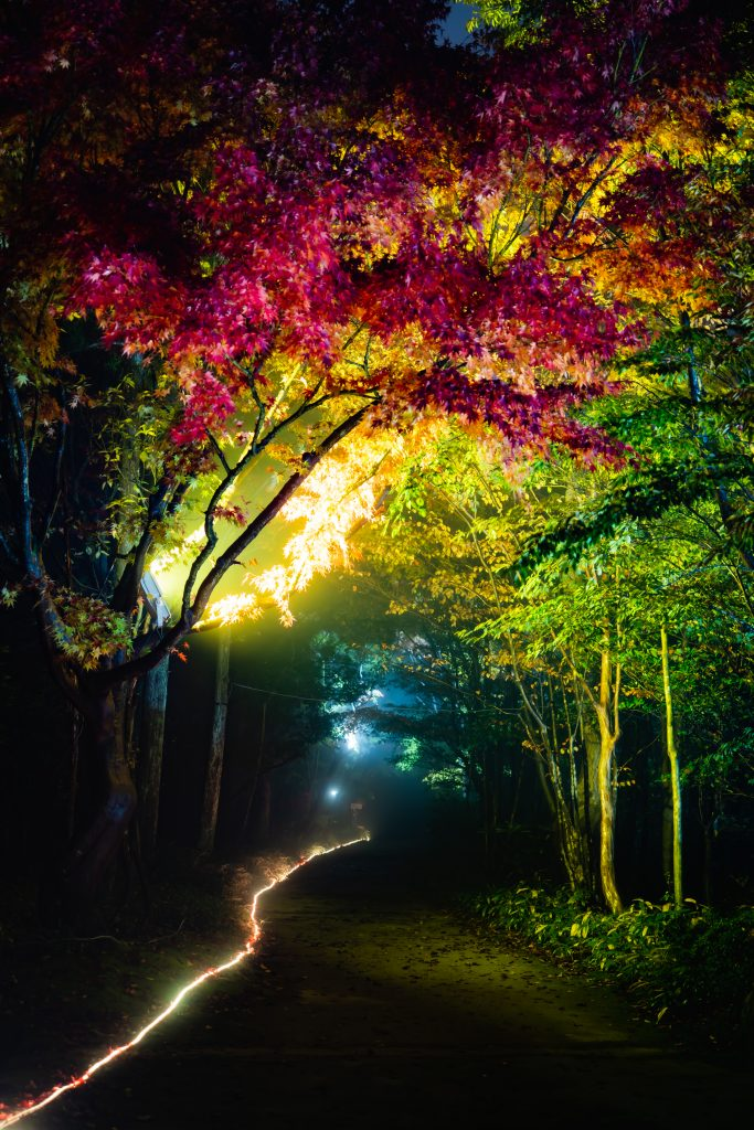 三景園ー夜撮影10