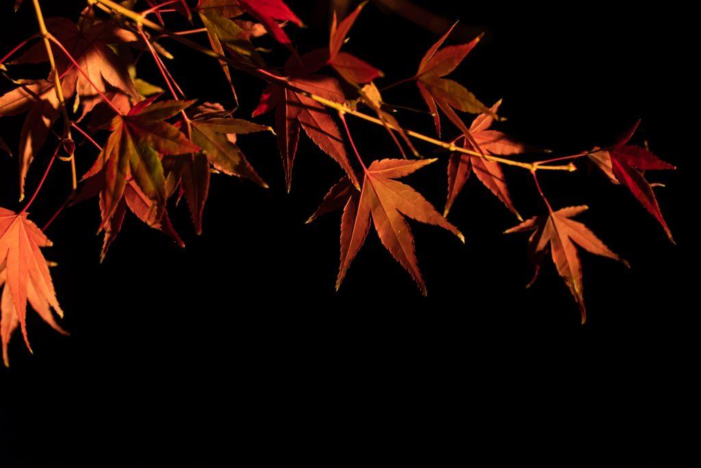 縮景園-夜撮影7