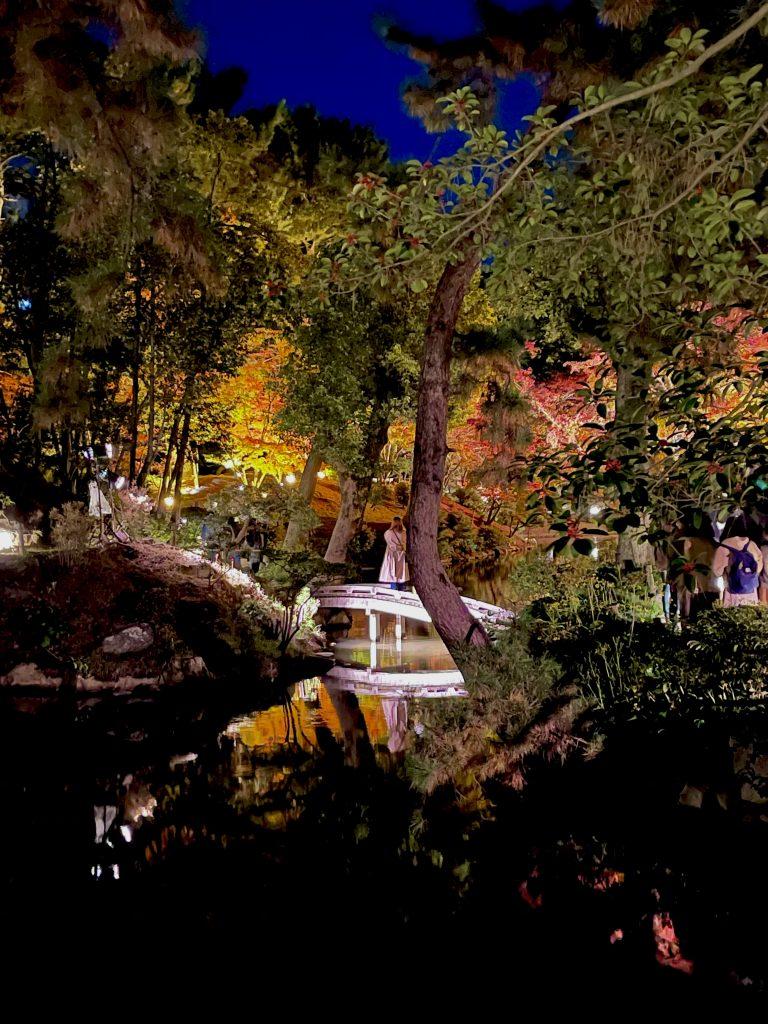 縮景園-夜撮影10
