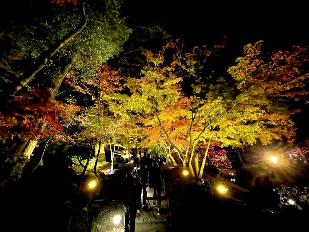 縮景園-夜撮影11