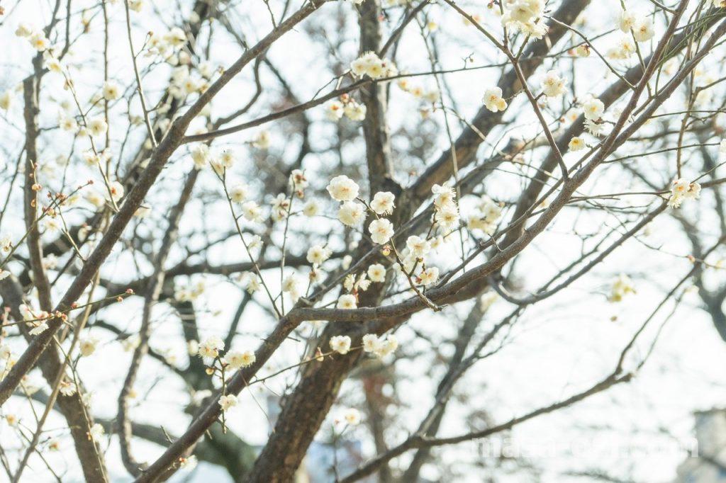 縮景園-昼撮影その4