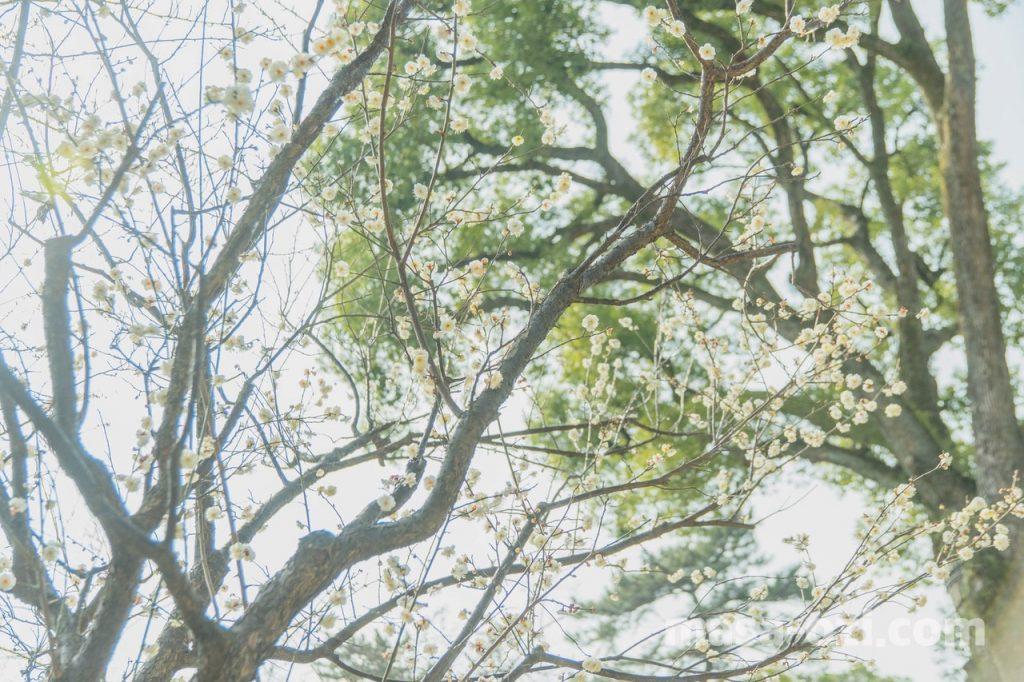 縮景園-昼撮影その5