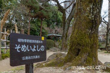 中区-縮景園-桜の標本木