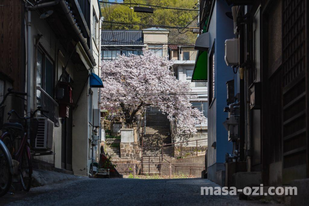 尾道市-春風景-昼撮影その3
