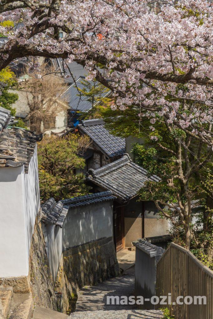 尾道市-春風景-昼撮影その15