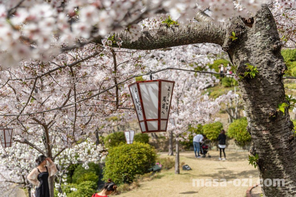 尾道市-春風景-昼撮影その20