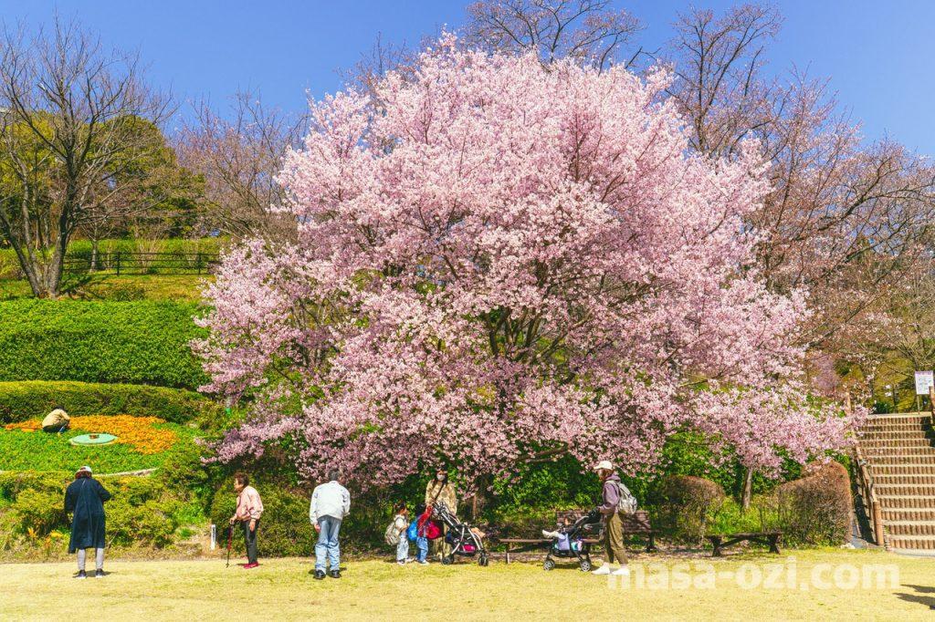 佐伯区-広島市植物公園-昼撮影その6
