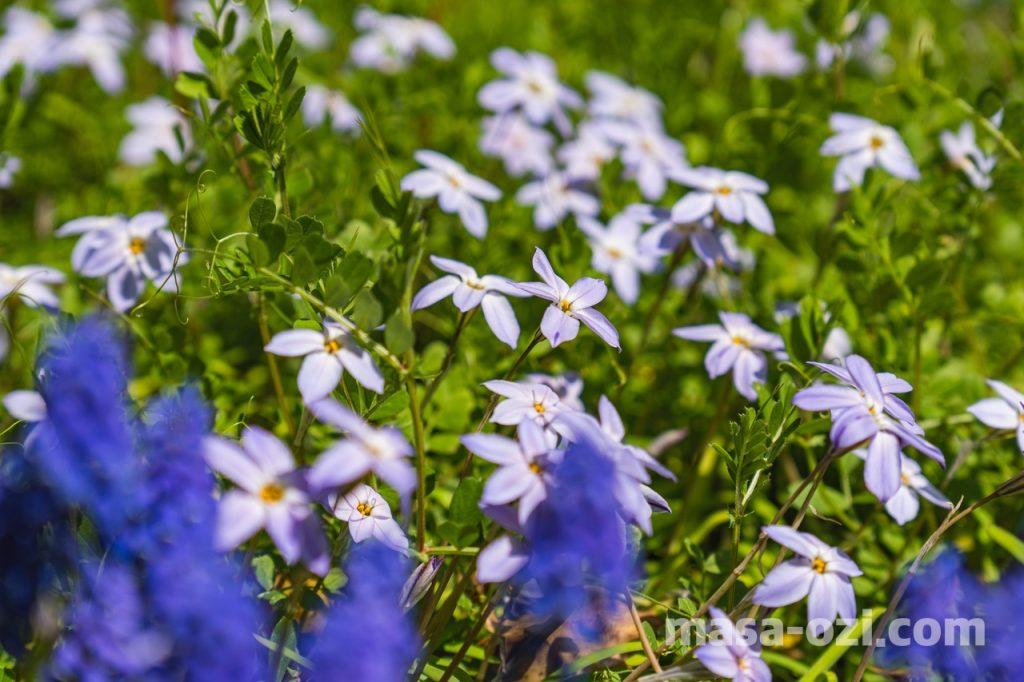 佐伯区-広島市植物公園-昼撮影その8
