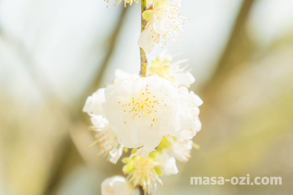 佐伯区-広島市植物公園-昼撮影その9