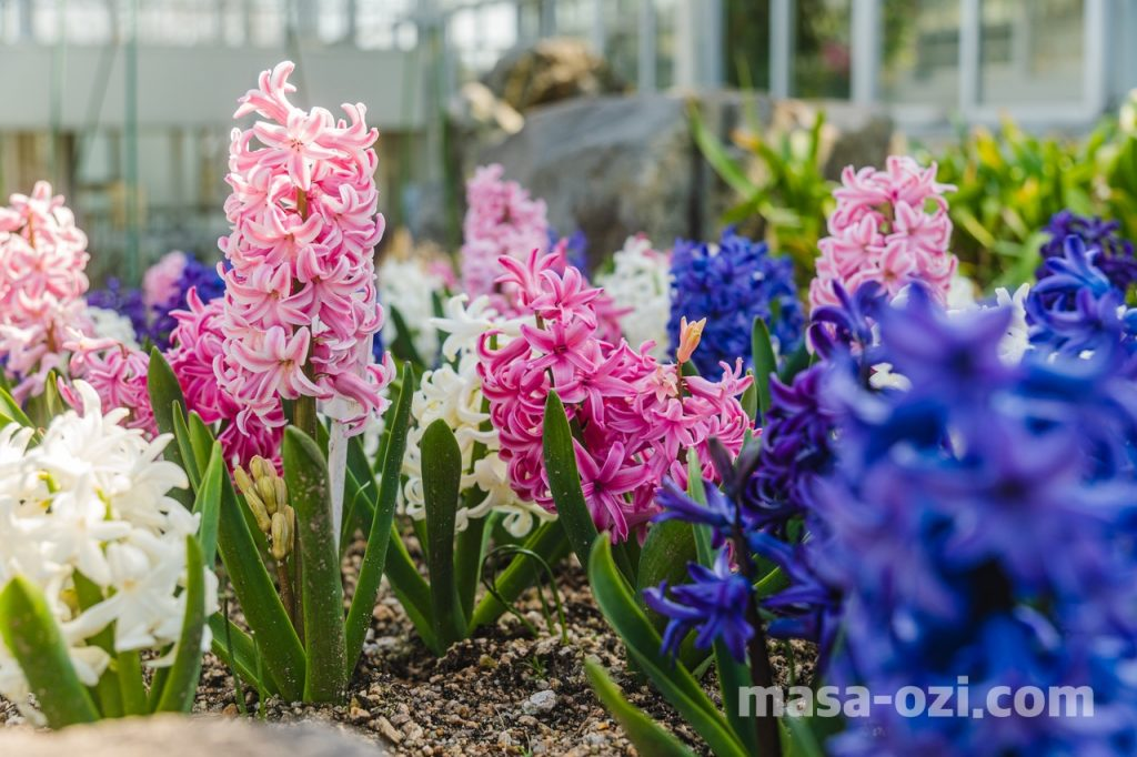 佐伯区-広島市植物公園-昼撮影その12