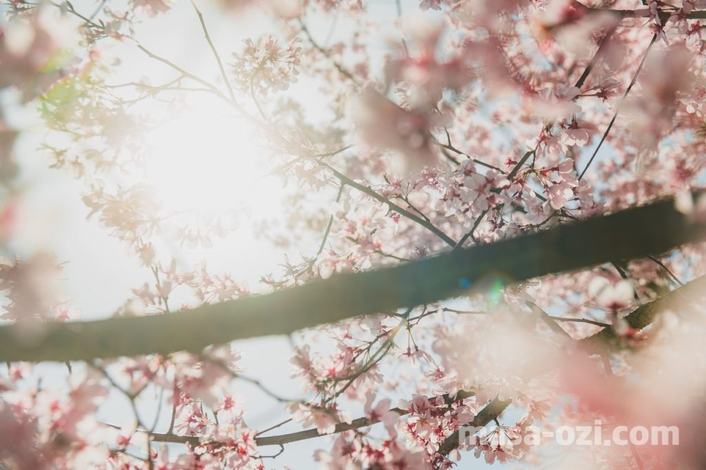 佐伯区-広島市植物公園-昼撮影その13
