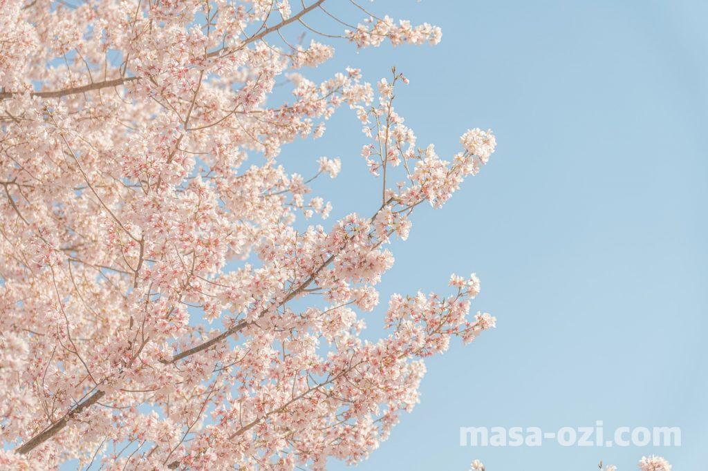 佐伯区-広島市植物公園-昼撮影その14