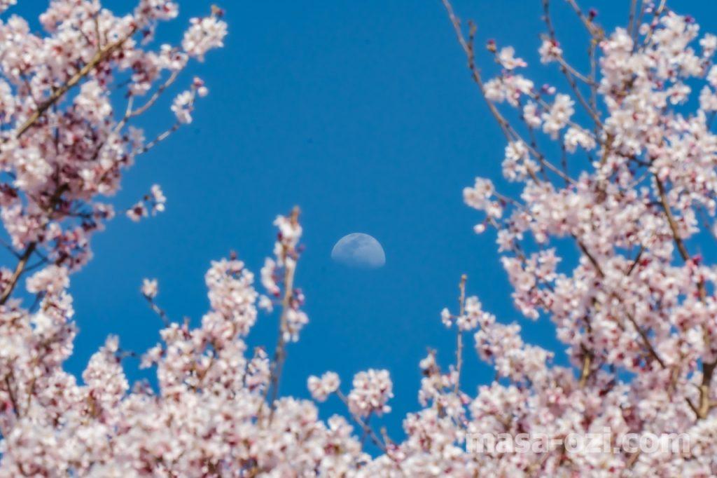 佐伯区-広島市植物公園-昼撮影その15