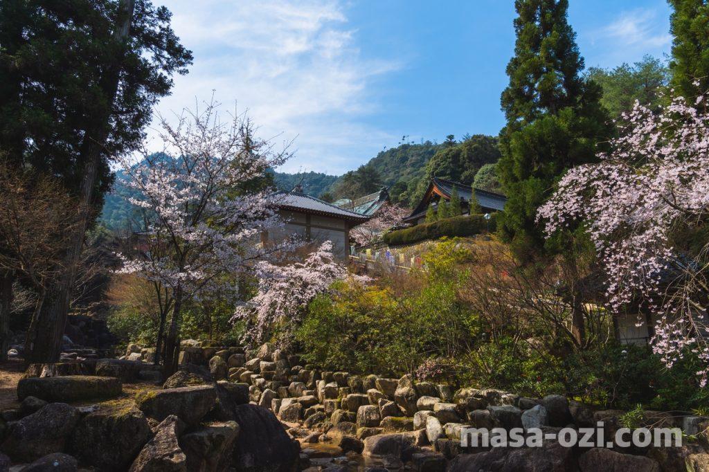 宮島-2021春-昼撮影その15