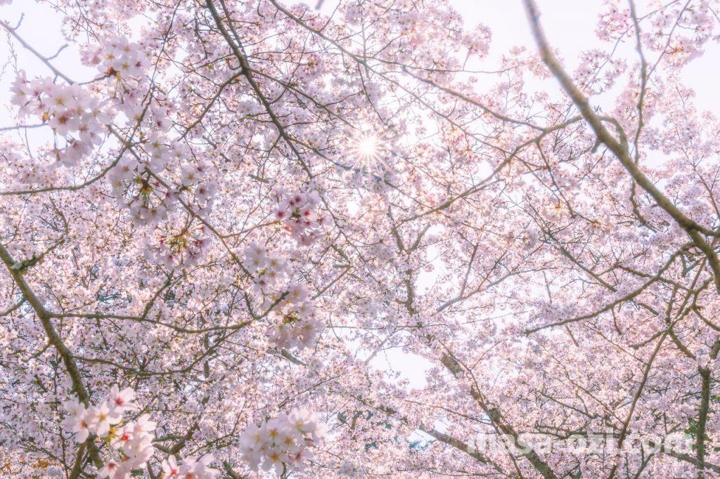 宮島-2021春-昼撮影その20