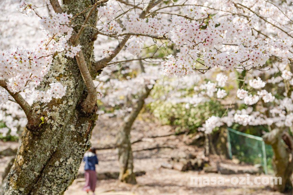 宮島-2021春-昼撮影その21