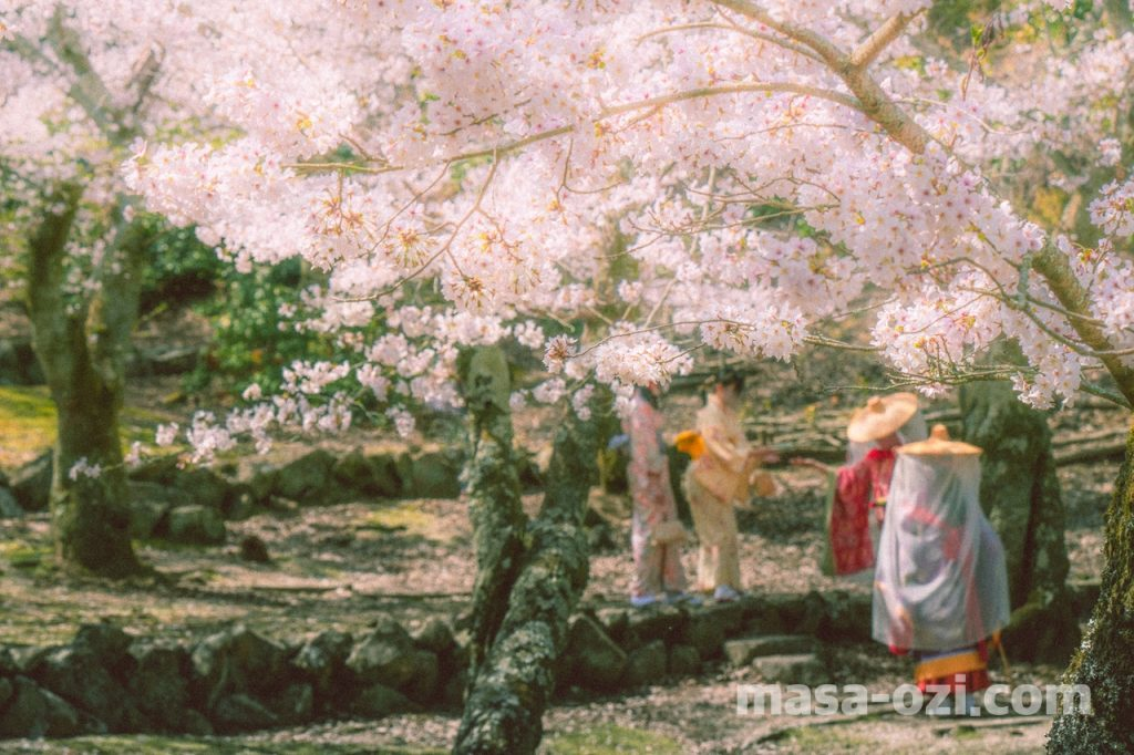 宮島-2021春-昼撮影その22