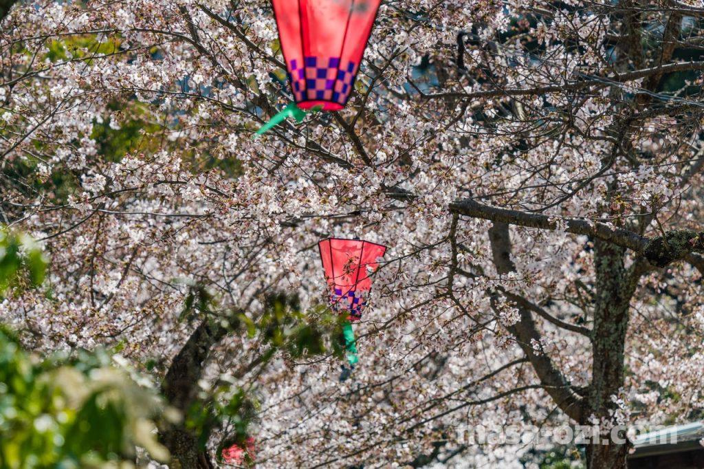 宮島-2021春-昼撮影その25