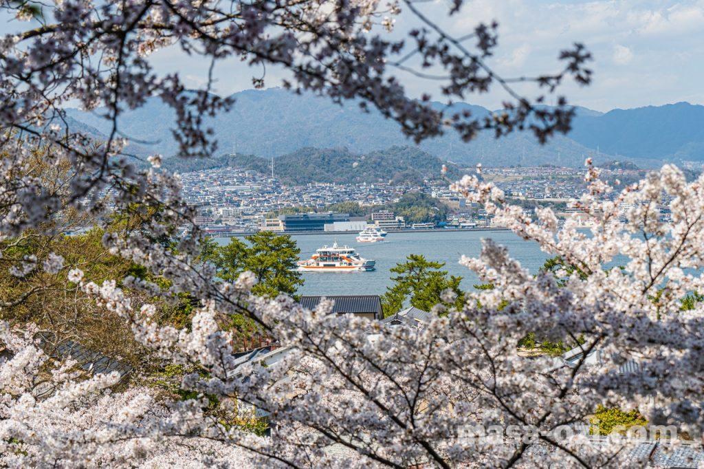 宮島-2021春-昼撮影その26