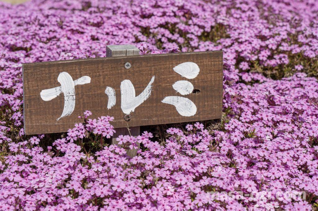 世羅郡-花夢の里-昼撮影その27