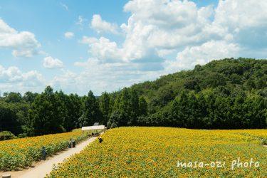 世羅郡-世羅高原農場-ひまわり2021